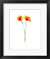 Framed Poppy II