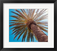 Framed Sunny Palms