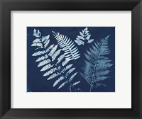 Framed Nature By The Lake - Ferns II