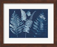 Framed Nature By The Lake - Ferns I