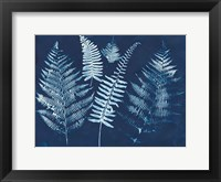 Nature By The Lake - Ferns I Framed Print