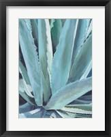 Framed Blue Agave