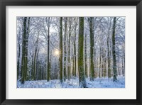 Framed Frosty Forest