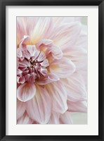Framed Blush Pink Dahlia