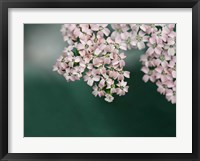 Framed Blush Pink Flowers