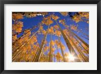 Framed Winter Aspens
