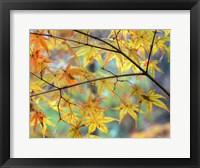 Framed Autumn Maples