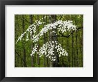 Framed Dogwood Tree