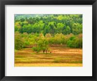 Framed Spring Trees