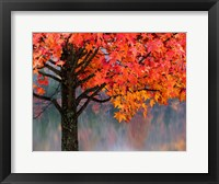 Framed Sweet Gum