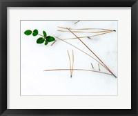 Framed Winter Foliage