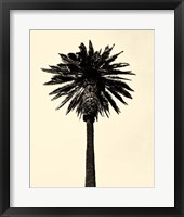 Framed Palm Tree 1979 Tan