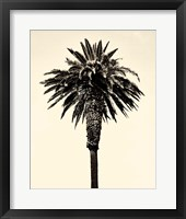 Framed Palm Tree 1996 (Tan)