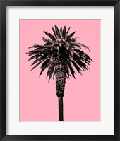 Framed Palm Tree 1996 (Pink)
