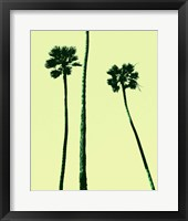 Framed Palm Trees 2000 (Cyan)