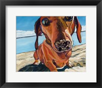 Framed Sand Dog