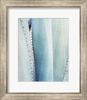 Framed Pale Blue Agave No. 3