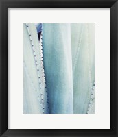 Framed Pale Blue Agave No. 3