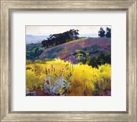 Framed Late Sun, Eucalyptus on the Ridge