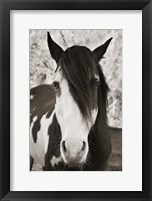 Framed Pale Eyed Stallion