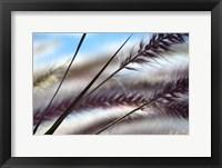 Framed Grasses No. 8