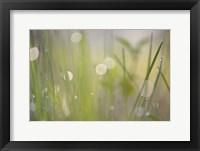 Framed Morning Light No. 2