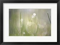 Framed Morning Light No. 3