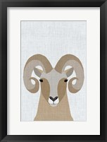 Framed Bighorn Sheep