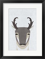 Framed Pronghorn Antelope