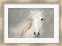 Framed Stallion Face