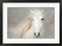 Framed Stallion Face