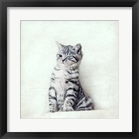 Framed Cat Winks