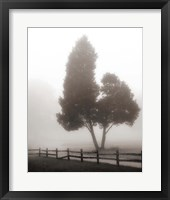 Framed Cedar Tree and Fence