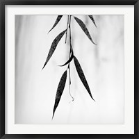 Framed Willow Print No. 2