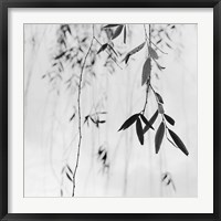 Framed Willow Print No. 3