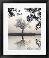 Framed Winter Willow