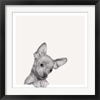 Framed Sweet Chihuahua