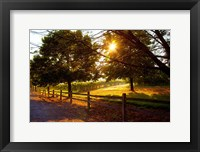 Framed Dreamland Vineyard