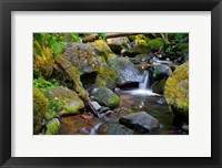 Framed Mossy Stream