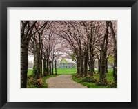 Framed Cherry Blossom Path