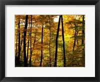 Framed Fall Colors