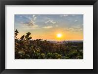 Framed Sea Grapes at Sunset