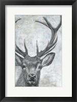 Framed Portrait of a Deer
