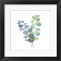 Framed Natural Inspiration Blue Eucalyptus on White I