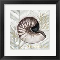 Framed Gray Gold Chevron Nautilus Shell