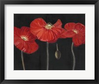 Framed Poppy Trio I