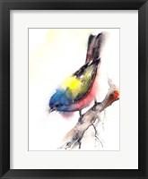 Framed Bunting Bird