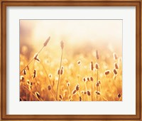 Framed Nothing Gold Can Stay