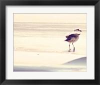 Framed Bird at The Beach