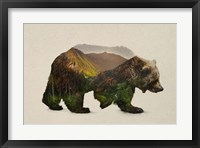 Framed North American Brown Bear